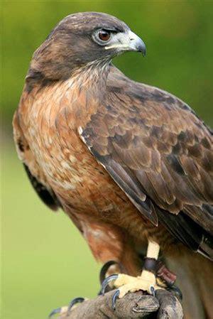 santa barbara zoo condors raptor roost
