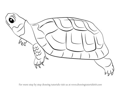 tutorial python mutagen step by step how to draw a bog turtle