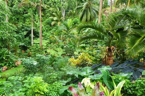 Garden In Wandering Among The Plants At Hunte S Gardens Barbados