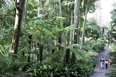 Royal Botanic Gardens Victoria Wikipedia Royal Melbourne Botanical Gardens