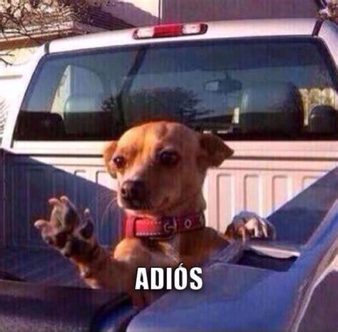 pin  sonia villalpando  mexican curios cute animals