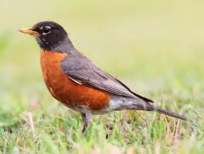 advent blogging for advent robins
