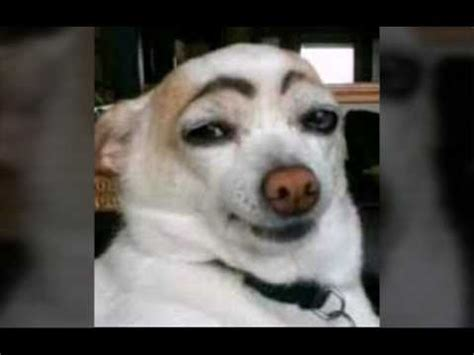 imagenes mas graciosas y chistosas del mundo los perros mas graciosos del mundo youtube