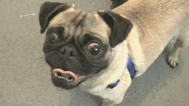 imagenes gif nuevas para pin perros perritos animados7 gifs locos animados