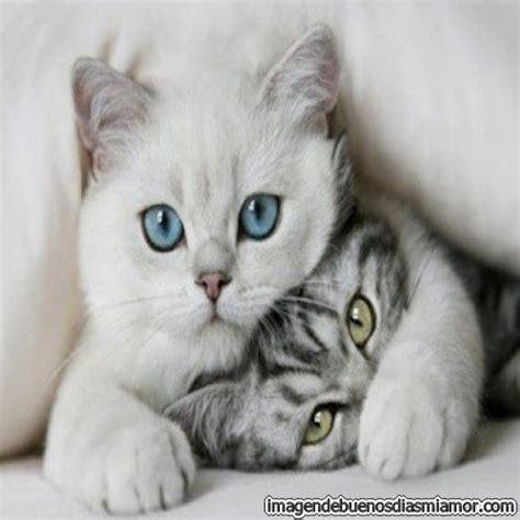 imagenes increibles de gatos bellas fotos de gatos hermosos imagenes de buenos dias