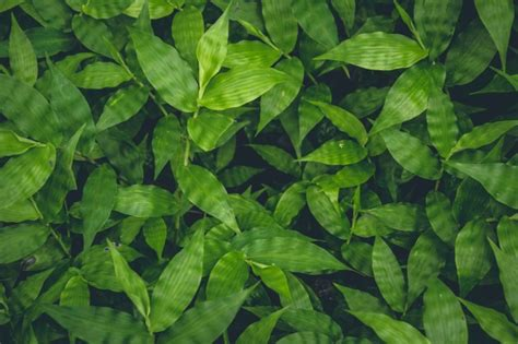 Green Plants by Top View Of Green Plants Growing Background Photo Free