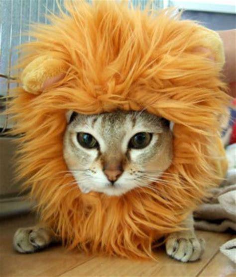 imagenes de leones y gatos gatos disfrazados de le 243 n gorro de le 243 n ω