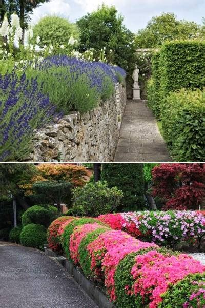 topiary ideas great decorative plants  beautify yard landscaping