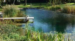 All about natural swimming pools green home guide ecohome