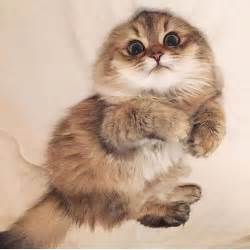 25+ best ideas about Cats on Pinterest | Cute kitty cats, Kitty cats ... Bestofcats