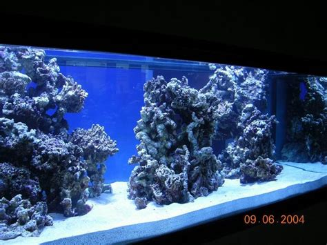 Saltwater Aquarium Aquascape by Reef Aquascaping Designs Search Aquarium