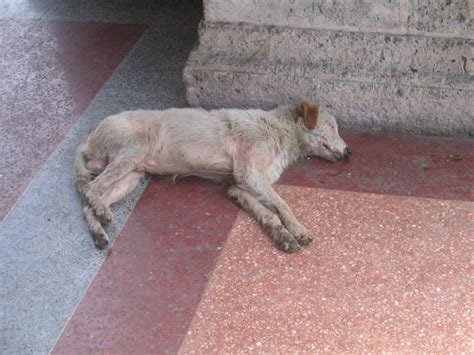dead puppy dead www pixshark images galleries with a bite