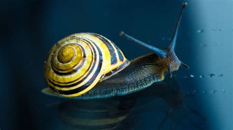 how should s nails be slugs and snails should we these gliding gastropods friends of the earth