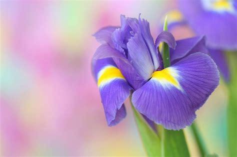 fiori per un compleanno fiori per compleanno a ciascuno il suo