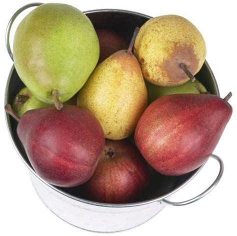 when do pear trees produce fruit when does a pear tree produce fruit ehow uk
