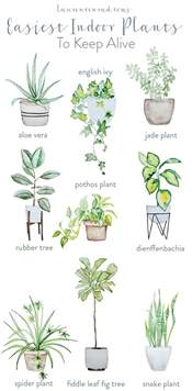 easiest indoor plants green thumb the easiest houseplants to keep alive