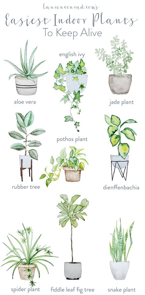 Easiest Indoor Plants | green thumb the easiest houseplants to keep alive