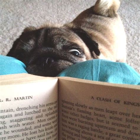 why do pugs smell so bad 10 reasons why your pug is staring at you right now