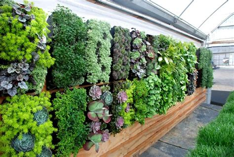 Vertical Garden Australia Courtyard Design Tips News White Golden Grove