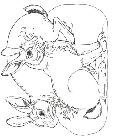 snow bunny coloring pages bunny rabbit coloring pages facebook downloads click