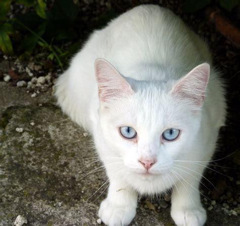 Are Cats With Blue Blind ѕυη 162 ℓαη ѕιgη υρ тняєαd closed