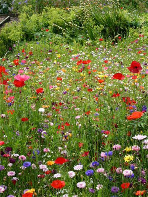 Annes Grove Garden Castletownroche Review Georgina Flowers Garden Grove