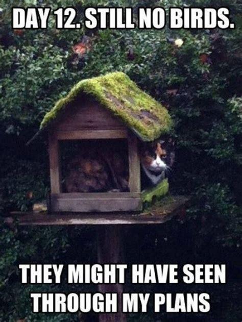 Gardening Memes - 82 best images about garden memes on pinterest gardens