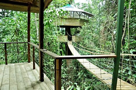 treehouse community treehouse living finca bellavista costa rica