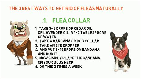 top 3 ways to get rid of flea on dogs funnydog tv