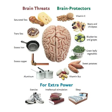 diet for the mind the science on what to eat to prevent alzheimer s and cognitive decline books brain power science time