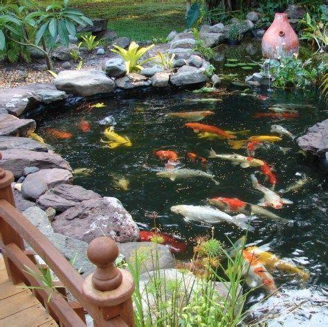 backyard koi ponds 17 best ideas about koi ponds on pinterest ponds koi for sale and backyard ponds