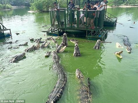 film thailand buaya chinese tourists climb aboard a flimsy raft in crocodile