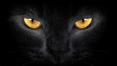 a black cat unknown black cat underworldtales