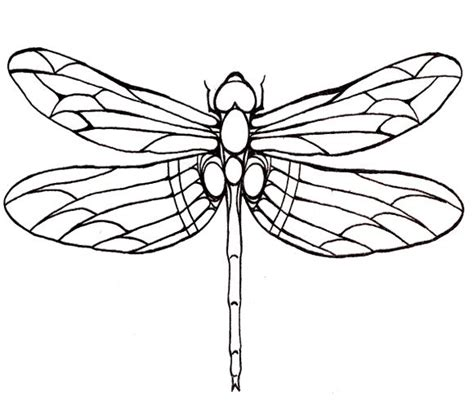 Dragonfly Coloring Book Pages by Dragonfly Large Winged Coloring Page For Patterns