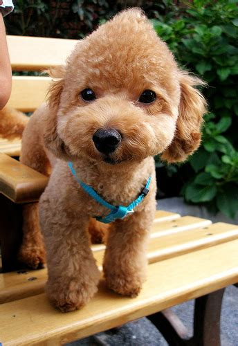 baby haircuts bellingham wa pet stores in bellingham washington petswelcome com