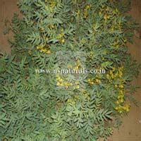 Top Notch Bio Additive senna extracts manufacturers suppliers exporters in india