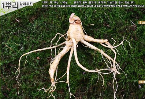 Ginseng Korea 87 best 인삼 ginseng images on korea asian and