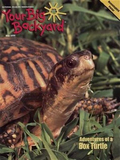 your big backyard magazine best subscription deal on