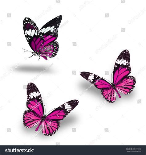 Butterfly Set Pink butterfly set beautiful pink butterflies flying up stock