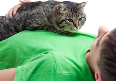was tun wenn die katze in die wohnung pinkelt wissen 252 ber haustiere was tun wenn katzen zicken