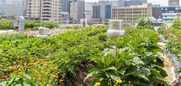 What Is Urban Gardening - the best tips for starting a small urban garden naturalcave
