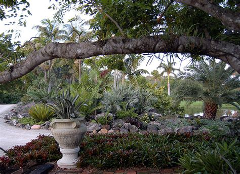 drought tolerant palm and bromeliad landscape