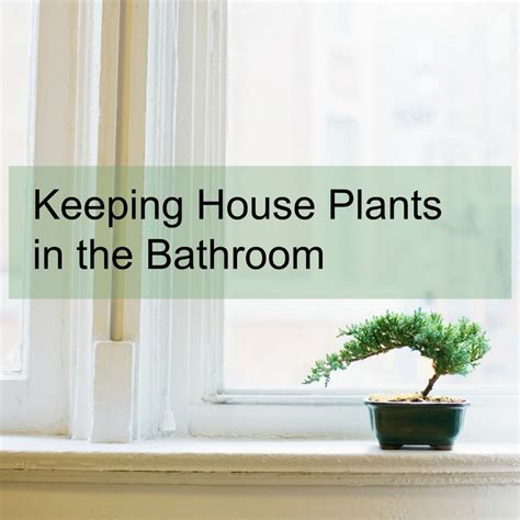 plants to keep in bathroom plants to keep in bathroom 28 images best plants for