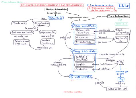 bases legales y de organizaci n estructural de la tema 2 organizaci 211 n celular de los seres vivos juan
