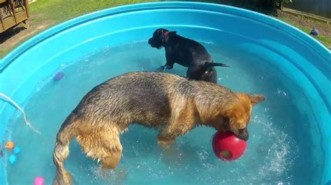 Planschbecken Kunststoff Hund by Gopr0044 Poly Stock Tank As A Doggie Pool Gsd S And Pit