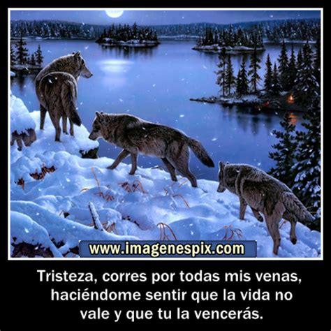 imagenes con frases de amor con lobos la huella del lobo ib 201 rico 09 13 13