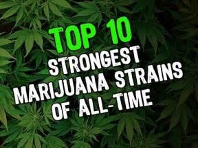 Top 10 strongest marijuana strains of all time 2014 youtube
