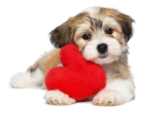 puppy valentines 10 names inspired by s day
