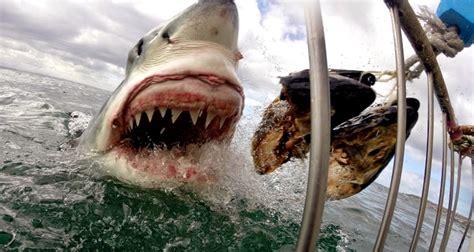 imagenes impresionantes de tiburones fotos impresionantes de tibur 243 n blanco nuestroclima