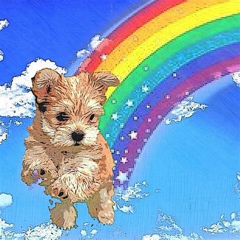 rainbow puppies rainbow puppies related keywords rainbow puppies keywords keywordsking
